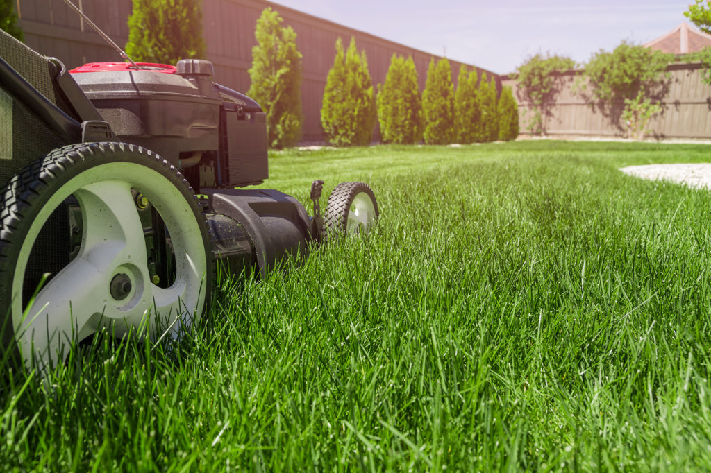 lawn maintenance and mowing services