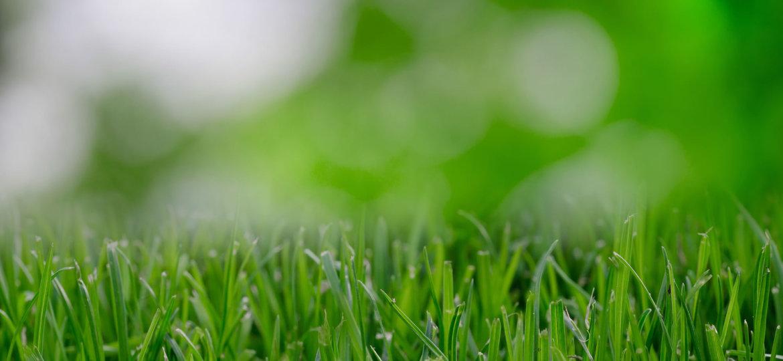 bg-grass