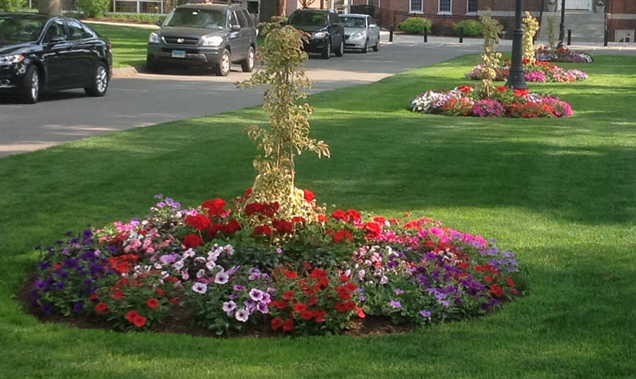 commercial property flower planting